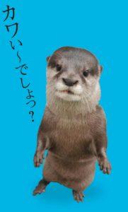 majikawa_b1_08231-1