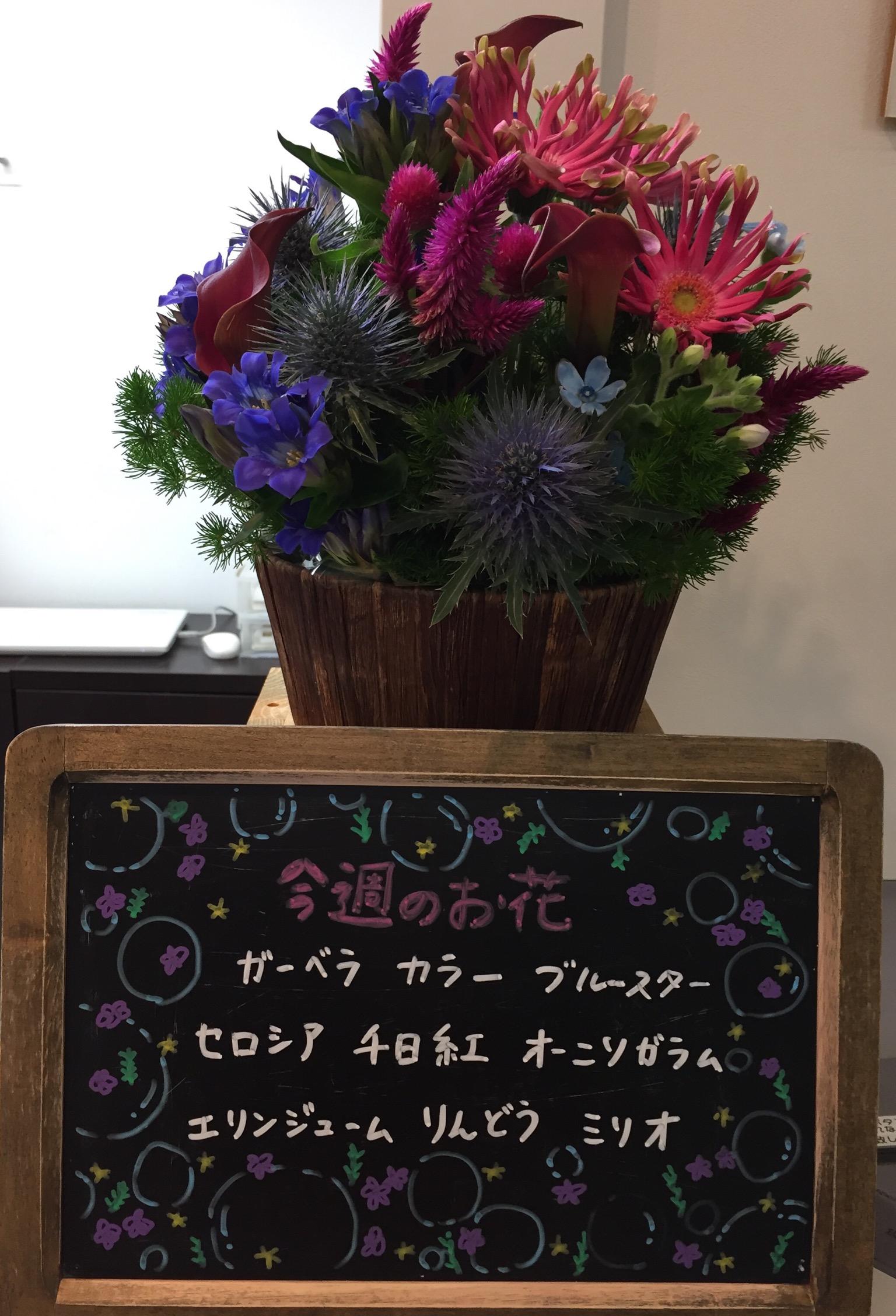 今週(10月23日〜)のお花