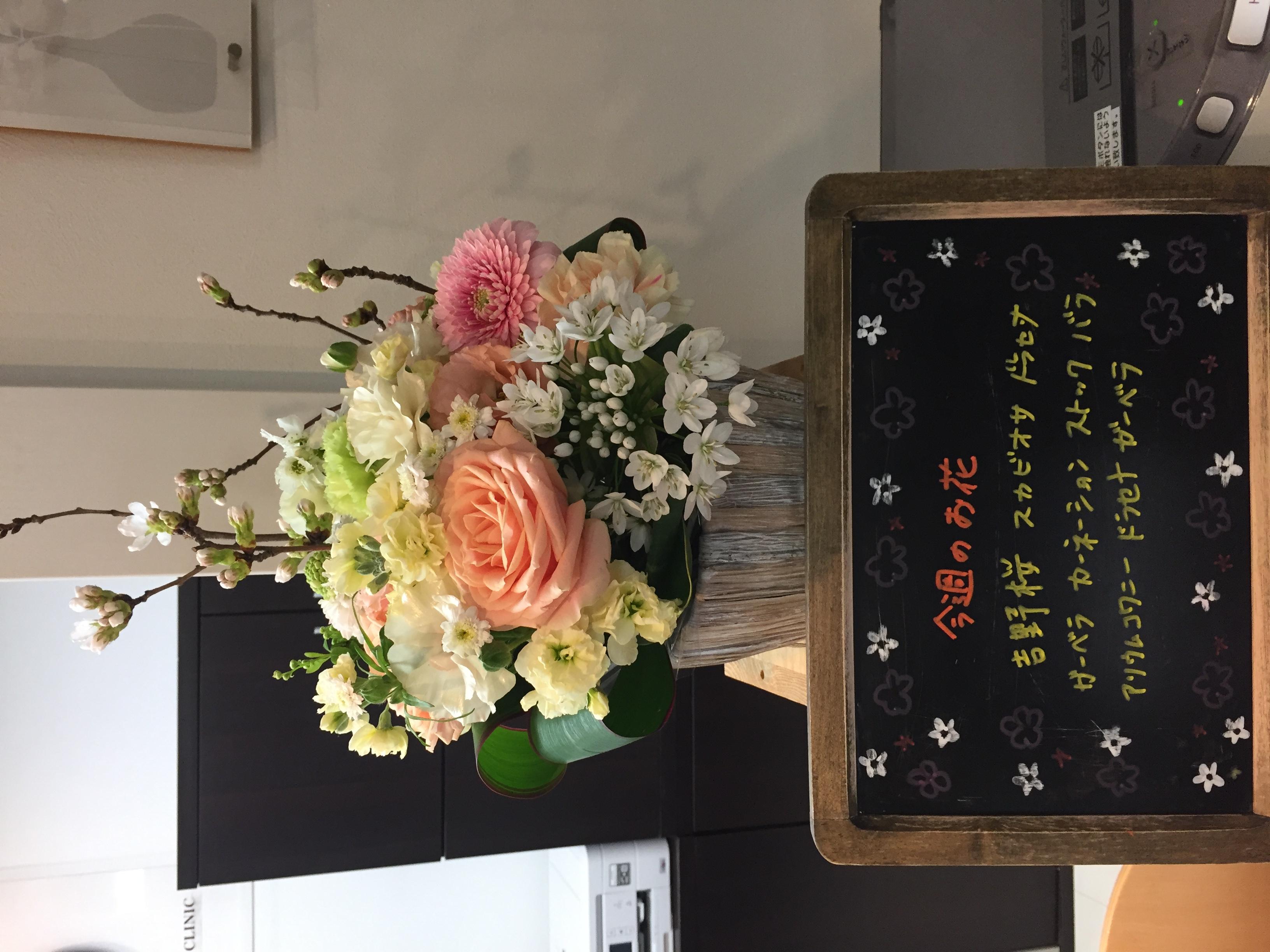 今週(3月23日〜)のお花