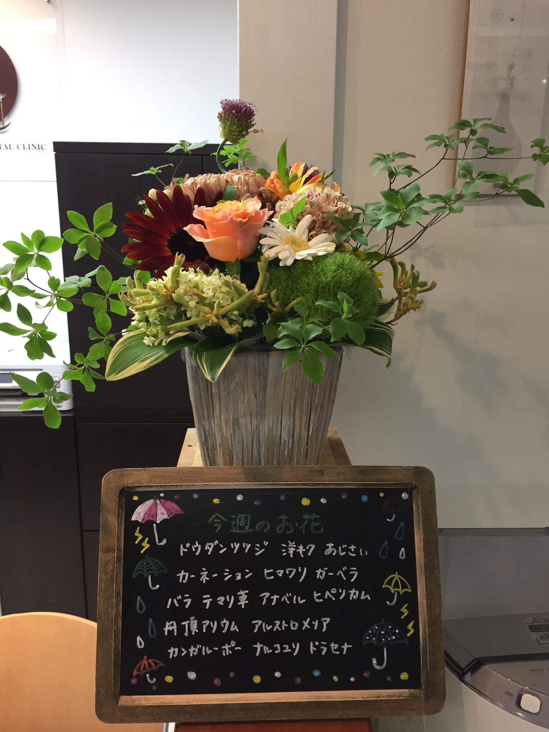 今週(6月22日〜)のお花