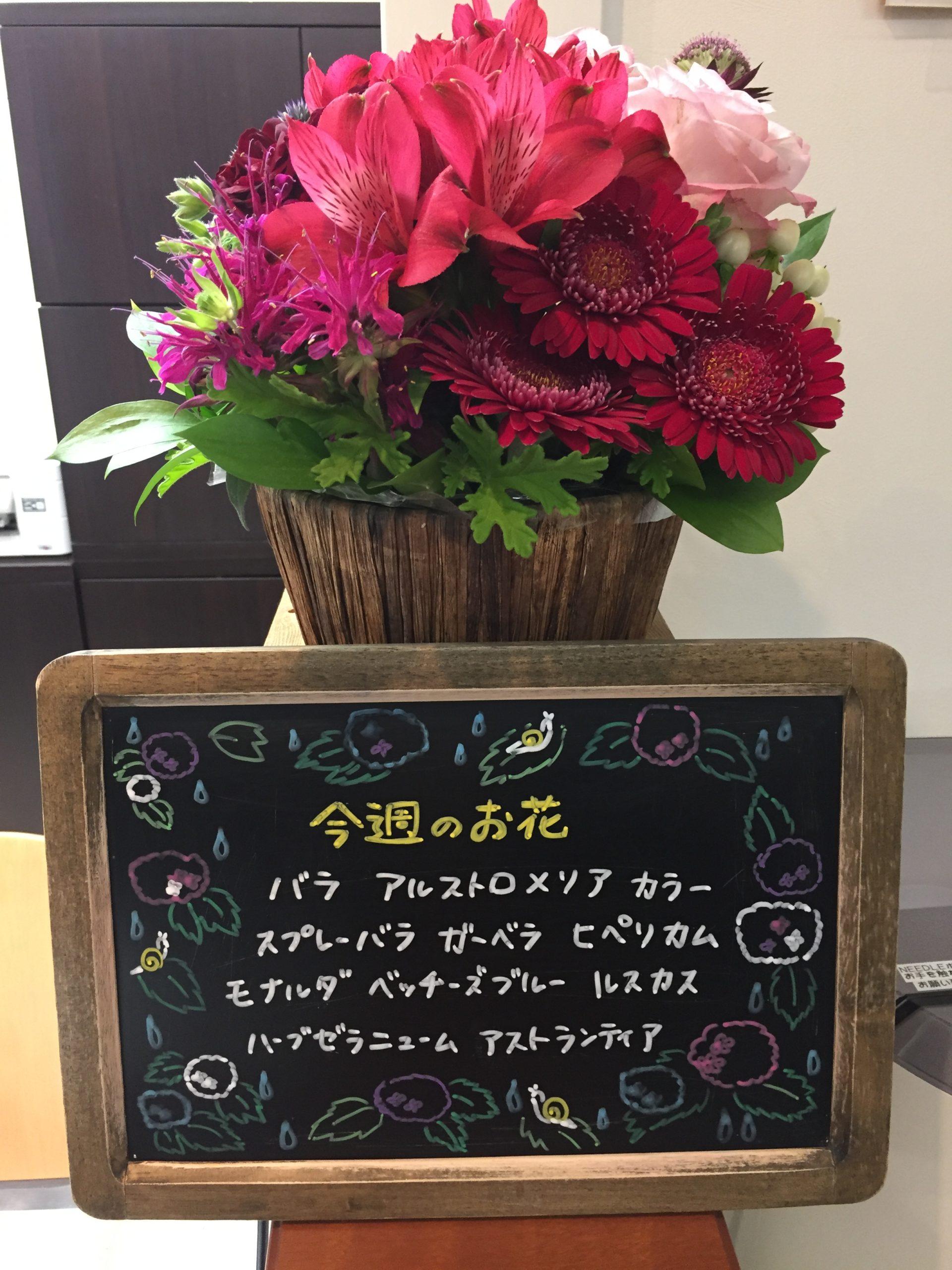 今週(6月8日〜)のお花
