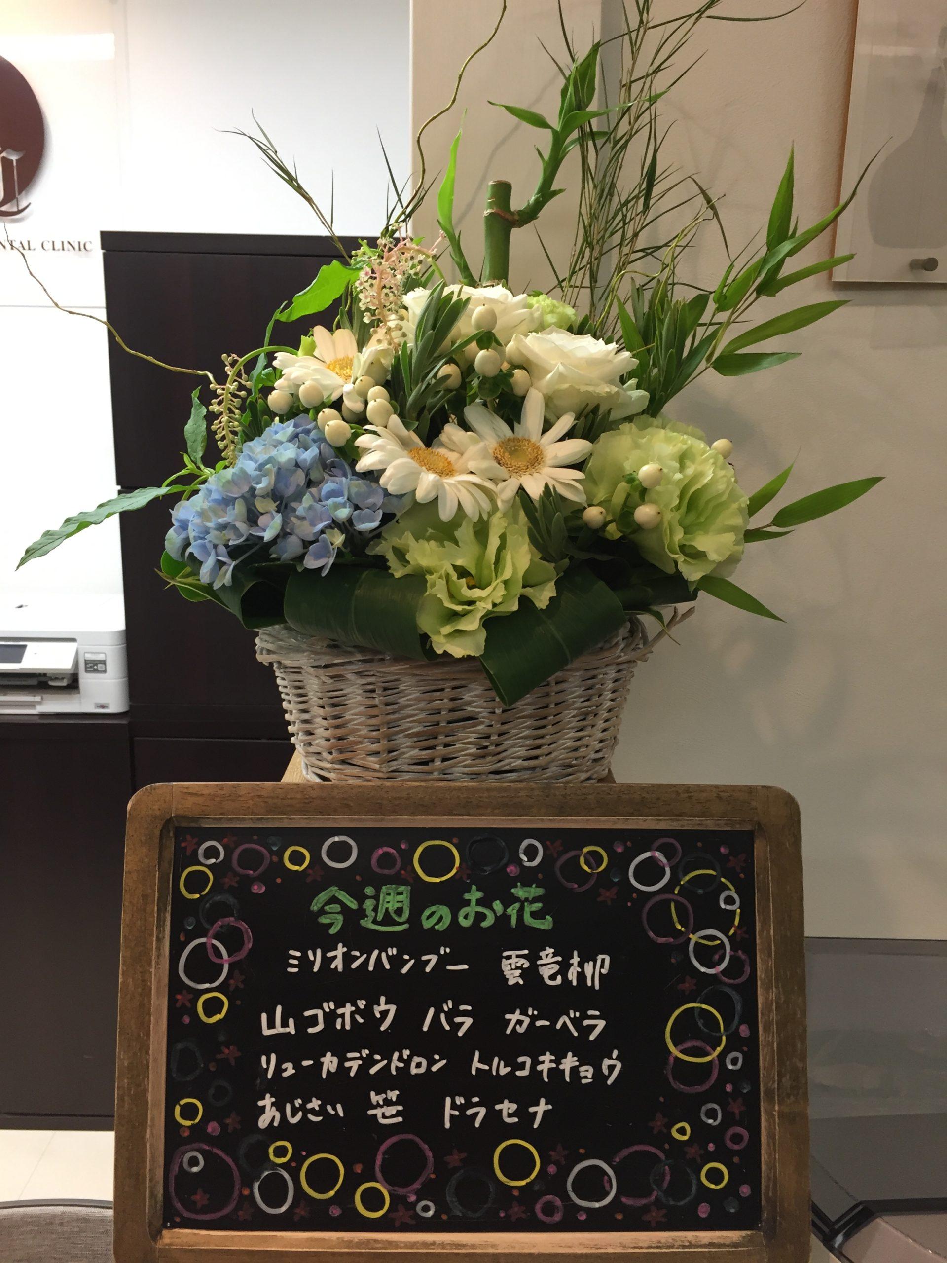 今週(7月6日〜)のお花