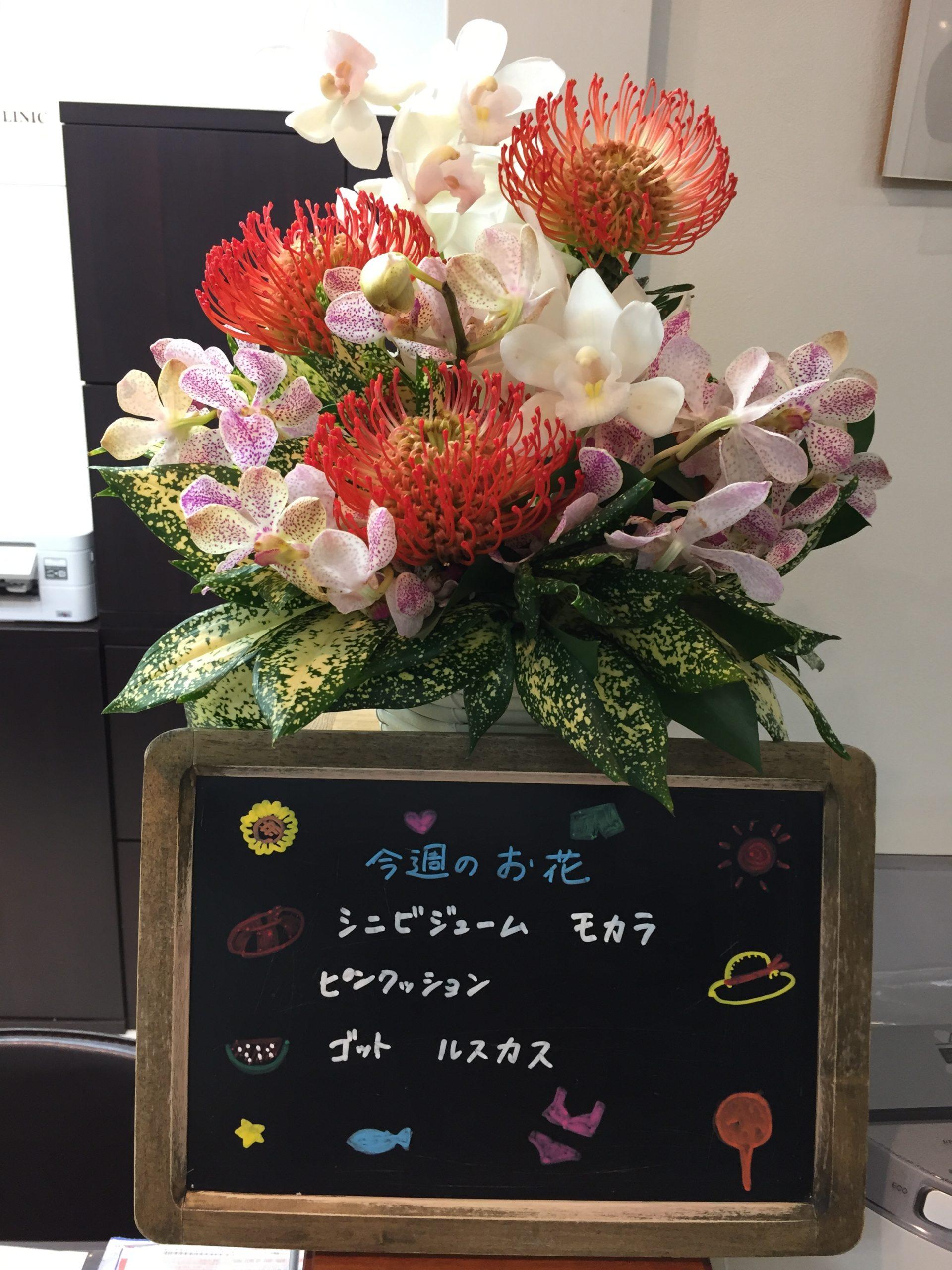 今週(8月17日〜)のお花