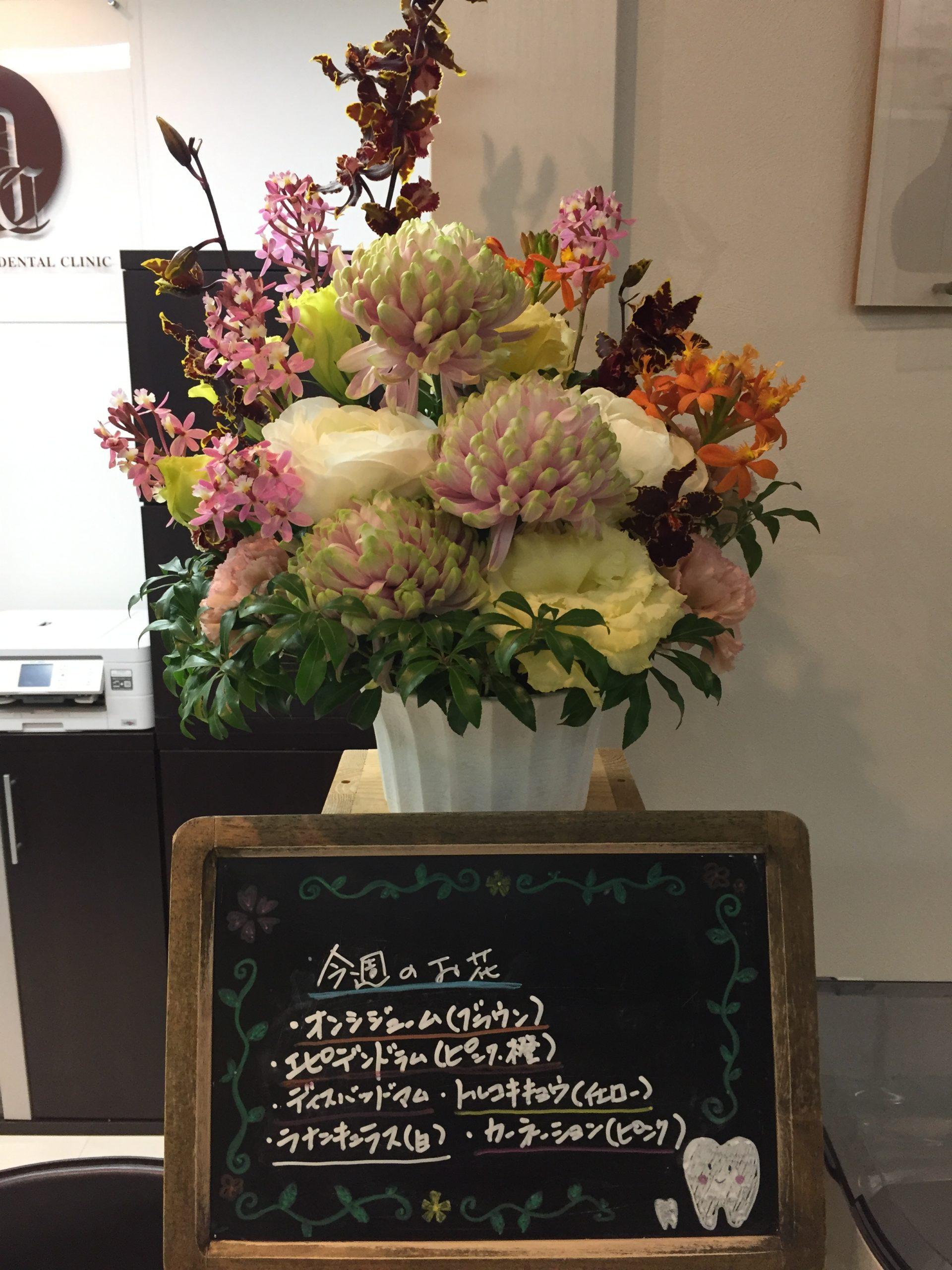 今週(2月22日〜)のお花